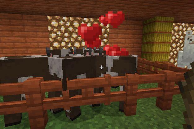 Como atraer a las vacas en Minecraft
