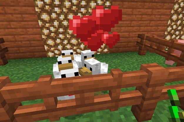 Como atraer gallinas en Minecraft