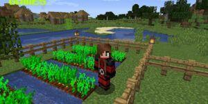 Cómo jugar Minecraft con amigos