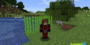 Cómo plantar caña de azúcar en Minecraft