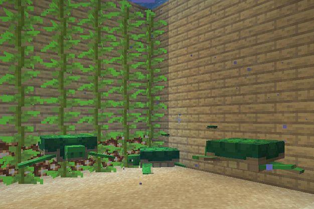 como criar tortugas en minecraft
